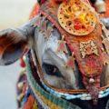 ヒンドゥー教が牛を食べない本当の理由